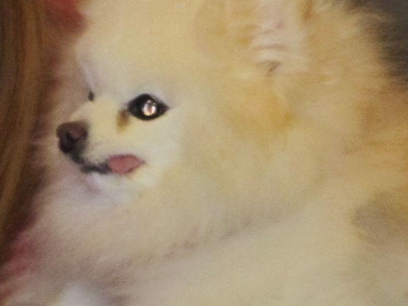 Gw doglet tounge